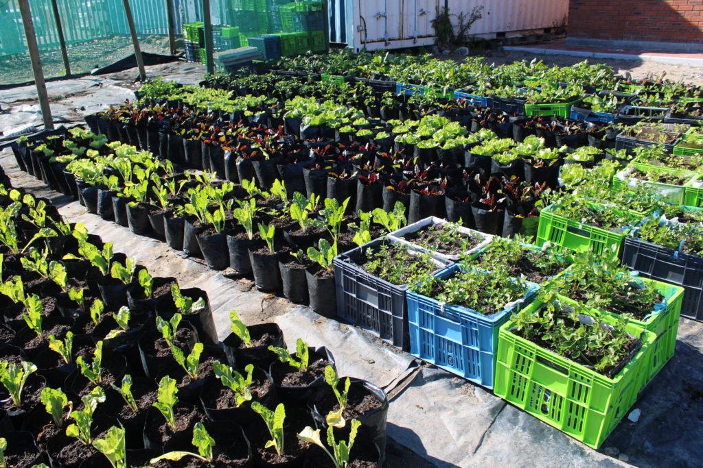 Urban Gardening abundance